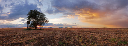 Plowed field Panorama with tree at sunset Royalty Free Stock Photos