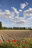 Plowed field with Poppies Stock Images