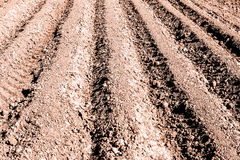 The plowed field prepared for crops Stock Photography