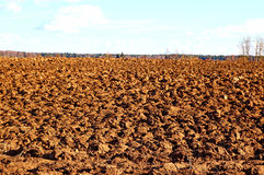 Plowed field prepared for sowing winter crops Stock Photo