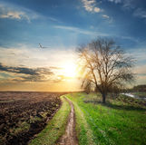 Plowed field and road Stock Photography