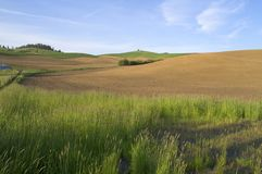 Plowed field rolling hills Palouse Country USA Stock Photography