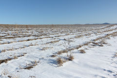 The plowed field in snow in the early spring Stock Photography
