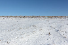 The plowed field in snow in the spring Royalty Free Stock Photography