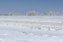 The plowed field in snow in the  spring Stock Image