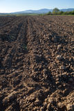 Plowed field in spring Royalty Free Stock Image