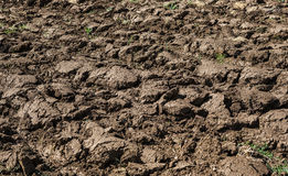 Plowed field in spring Stock Image