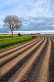 Plowed field in spring Stock Photos