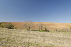 Plowed field in spring time Stock Photo