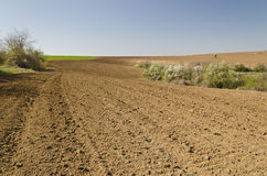Plowed field in spring time Stock Photos