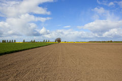 Plowed field in springtime Royalty Free Stock Photography