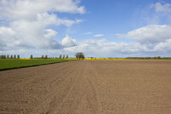 Plowed field in springtime with wheat Royalty Free Stock Photo