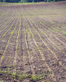Plowed field, stretching to horizon Stock Images