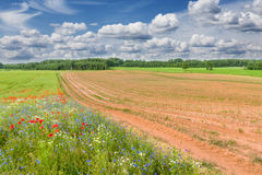 Plowed field. Stock Photography
