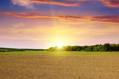 Plowed field and  sunset Stock Photo