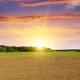 Plowed field and sunset Royalty Free Stock Photos