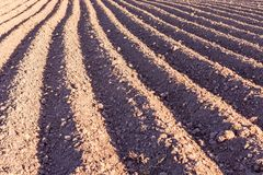 Plowed field texture Stock Photography