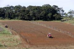 Plowed field Stock Image