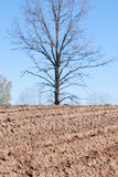 Plowed field and tree Stock Image