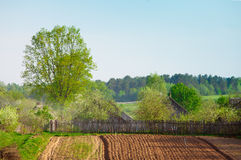 Plowed field and a tree Royalty Free Stock Images
