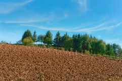 Plowed field, green spruce and blue sky, the plowed field under the blue sky. The plowed field under the blue sky, plowed field, green spruce and blue sky Royalty Free Stock Image