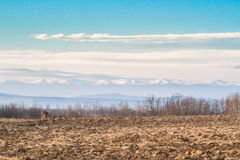 Plowed field in winter afternoon. Plowed field in a warm day of december without snow. Behind the hills are the mountains peaks full of snow Royalty Free Stock Image
