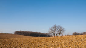 Plowed fields and blue sky Stock Photo