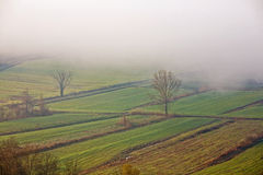 Plowed fields in the fog Royalty Free Stock Photos