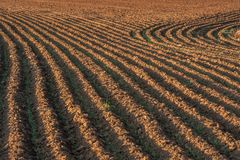 Plowed fields with furrow patterns stock photography