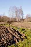 Plowed fields, grassland and birch trees in autumn Royalty Free Stock Photo
