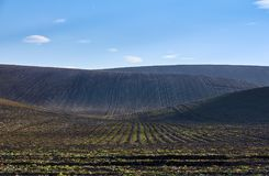 Plowed fields on the hills under a clear blue sky. With white clouds Royalty Free Stock Image
