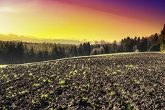 Plowed fields at sunrise. Swiss landscape with forests and plowed fields at sunrise. Agriculture in Switzerland, arable land and pastures Royalty Free Stock Image