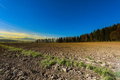 Plowed fields in Switzerland. Plowed fields on the background of snow-capped Alps at sunrise. Agriculture in Switzerland, arable land and pastures Royalty Free Stock Images