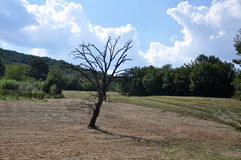 Plowed fields with trees Royalty Free Stock Photo