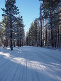 Plowed Forest Road Stock Images