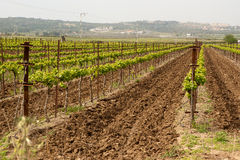 Plowed furrows in Hanadiv valley, Israel Royalty Free Stock Photo
