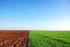 Plowed and green field Royalty Free Stock Photo