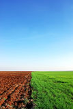 Plowed and green field Stock Photography