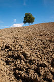 Plowed ground Royalty Free Stock Image
