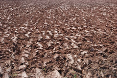 Plowed ground Stock Photo