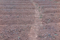 Plowed ground and brown soil Royalty Free Stock Image