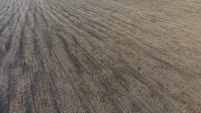 Plowed half agricultural field after the harvest of oats. close-up photo in summer.  Royalty Free Stock Photos