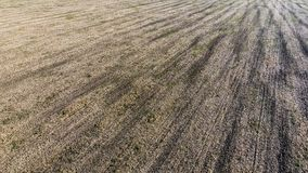 Plowed half agricultural field after the harvest of oats. close-up photo in summer Stock Images