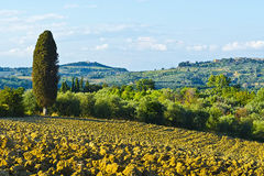Plowed Hills of Tuscany Royalty Free Stock Photos