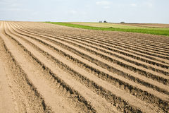 Plowed field. A plowed hillside field with furrows Stock Images