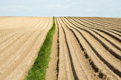 Plowed field. A plowed hillside field with furrows and grass Royalty Free Stock Photos