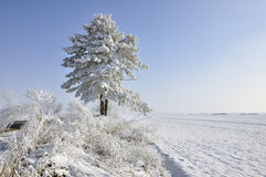 Plowed Land And Frost Pine Stock Photography