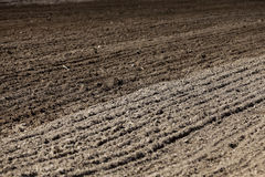 Plowed land for cereal Royalty Free Stock Image