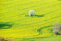 Plowed land. Colorful plowed land and a blue sky over it royalty free stock image