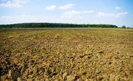 Plowed land by the forest royalty free stock photography